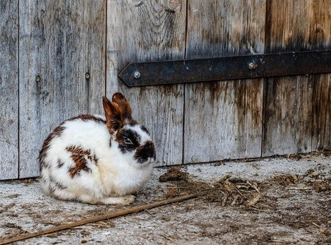 White Black and Brown Rabbit Near Brown Wooden Fence