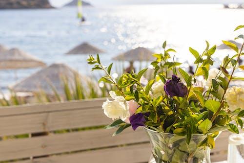 Free stock photo of background, beach, beautiful
