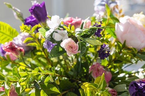 White and Purple Flower in Tilt Shift Lens