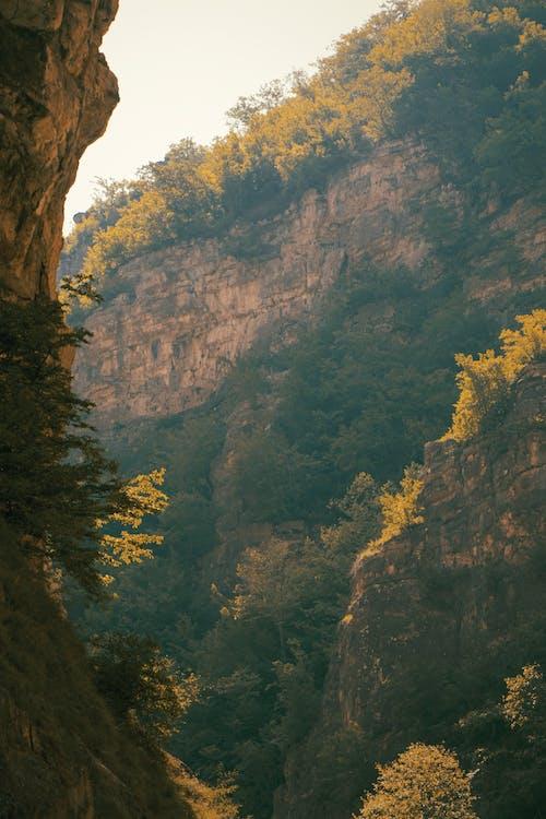 Základová fotografie zdarma na téma cestování, dřevo, hora