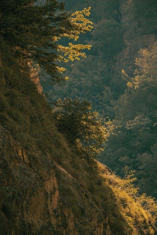 Základová fotografie zdarma na téma cestování, denní světlo, dřevo