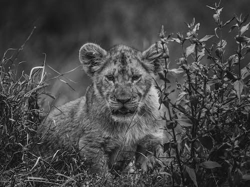 Photos gratuites de animal, arbre, carnivore