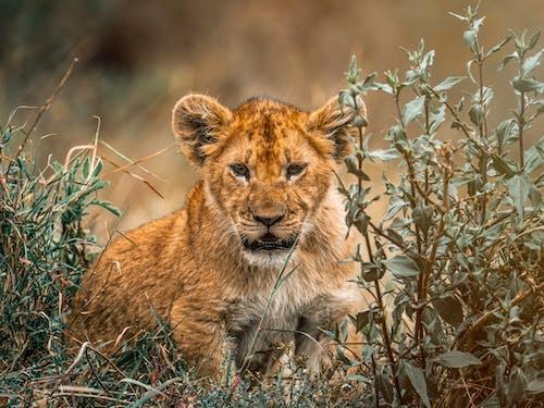 Photos gratuites de animal, carnivore, chasseur