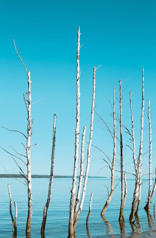 Δωρεάν στοκ φωτογραφιών με γαβγίζω, δέντρο, δέντρο σημύδας