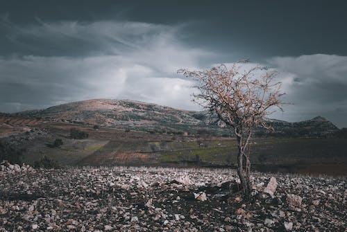 Foto profissional grátis de água, árvore, atraente