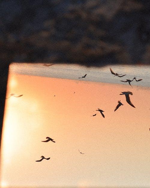 Foto stok gratis bayangan hitam, burung-burung, cakrawala di atas air