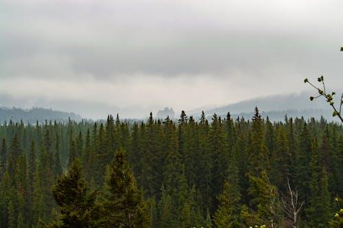 Ilmainen kuvapankkikuva tunnisteilla erämaa, luonto, metsä, puut
