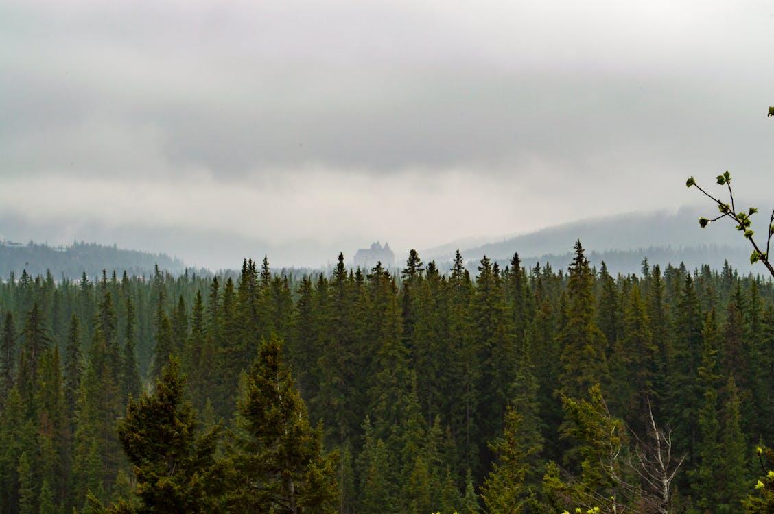 ağaçlar, bakir bölge, doğa