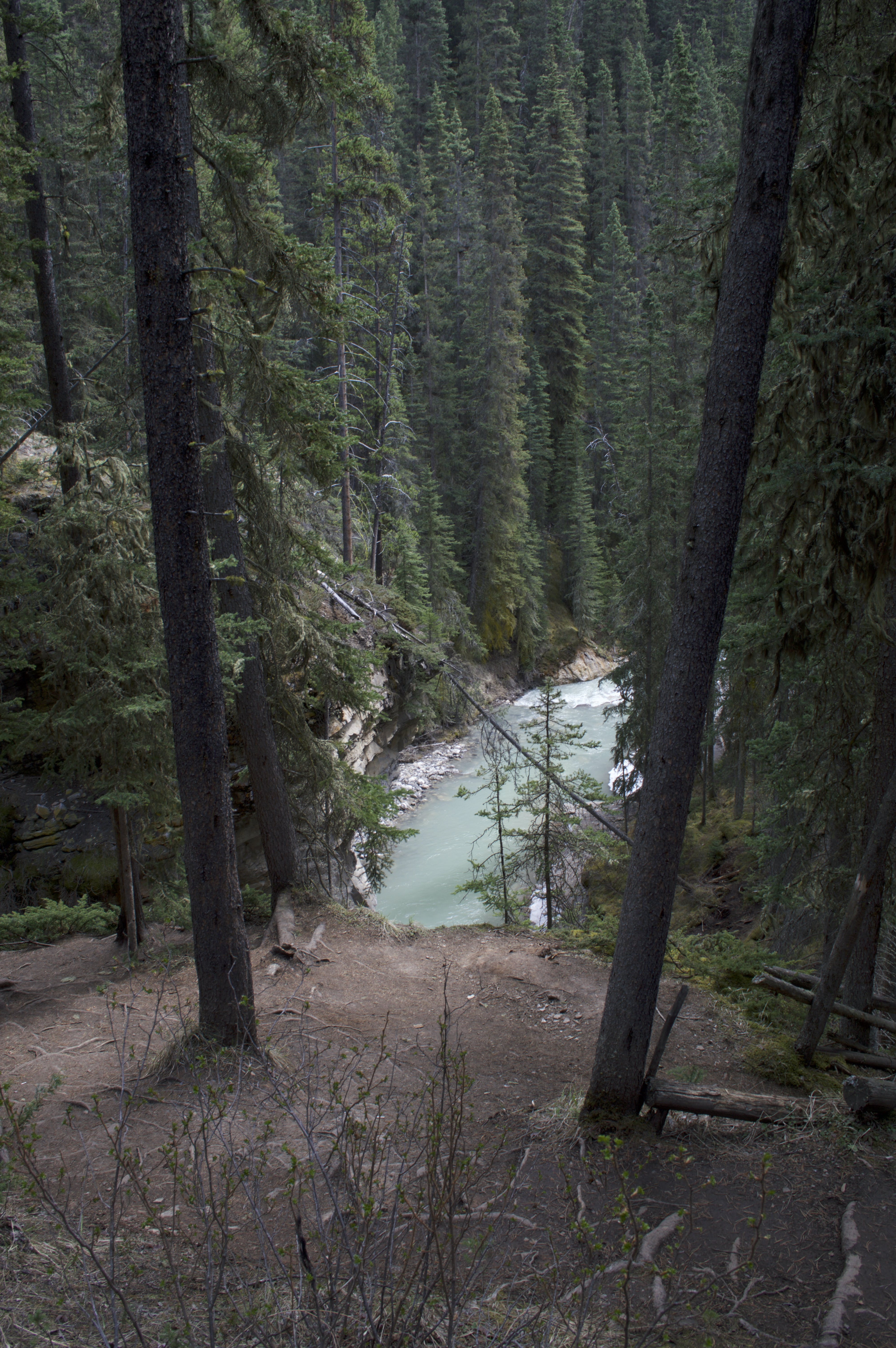 Free stock photo of canada, clear water, crystal clear, forest