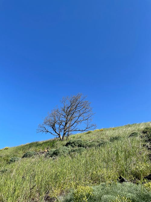 Free stock photo of blue sky, landscape, nature