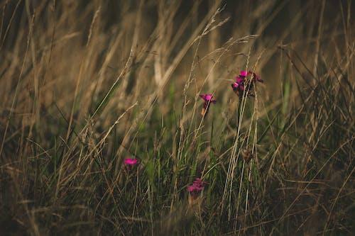 Δωρεάν στοκ φωτογραφιών με άγριος, ανάπτυξη, αυγή