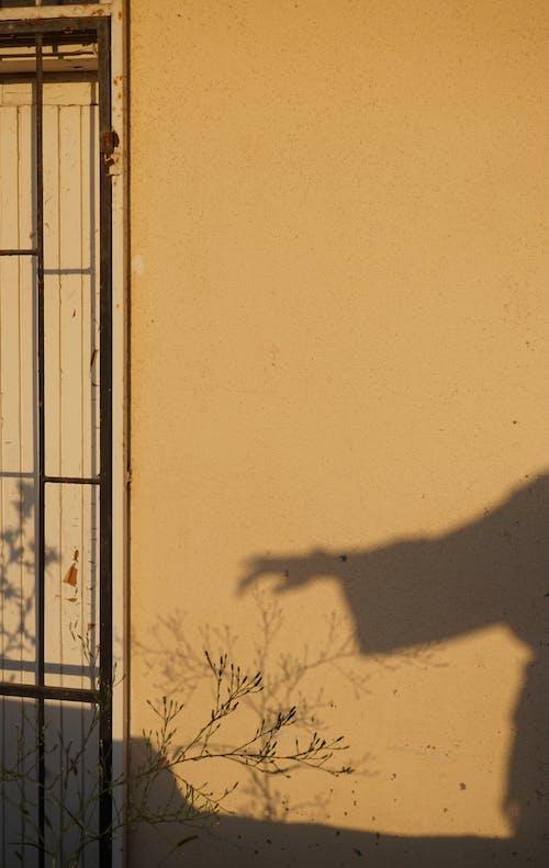 Kostenloses Stock Foto zu äste, draußen, geäst