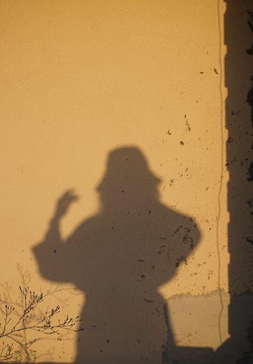 分支機構, 剪影, 女人 的 免費圖庫相片