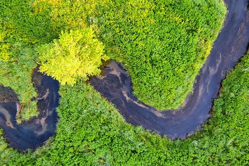 강, 경치, 공원의 무료 스톡 사진