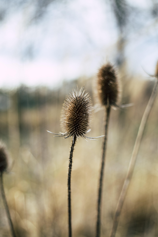 autumn, beautiful, bloom