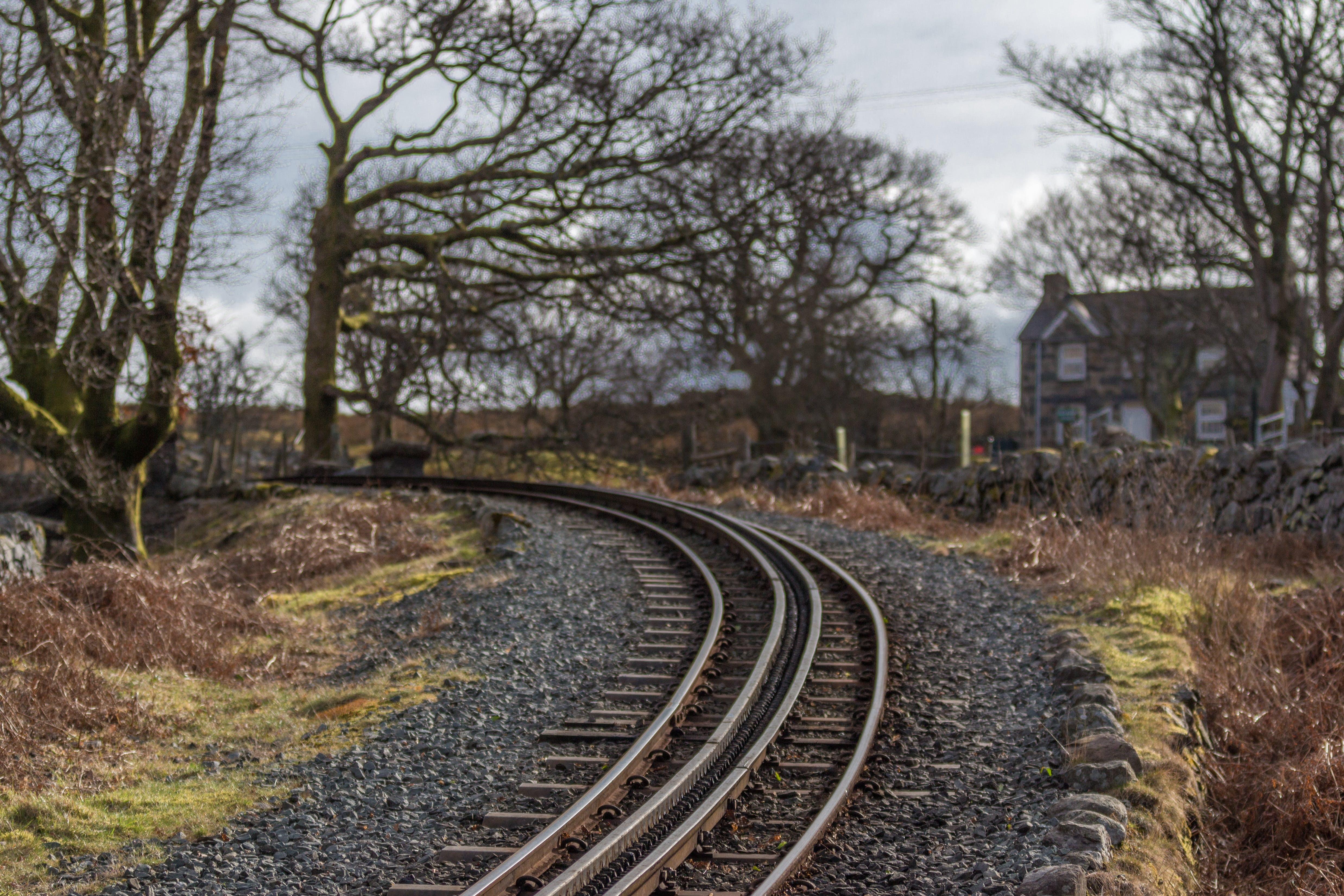 Railway Surrounded By Withered Trees