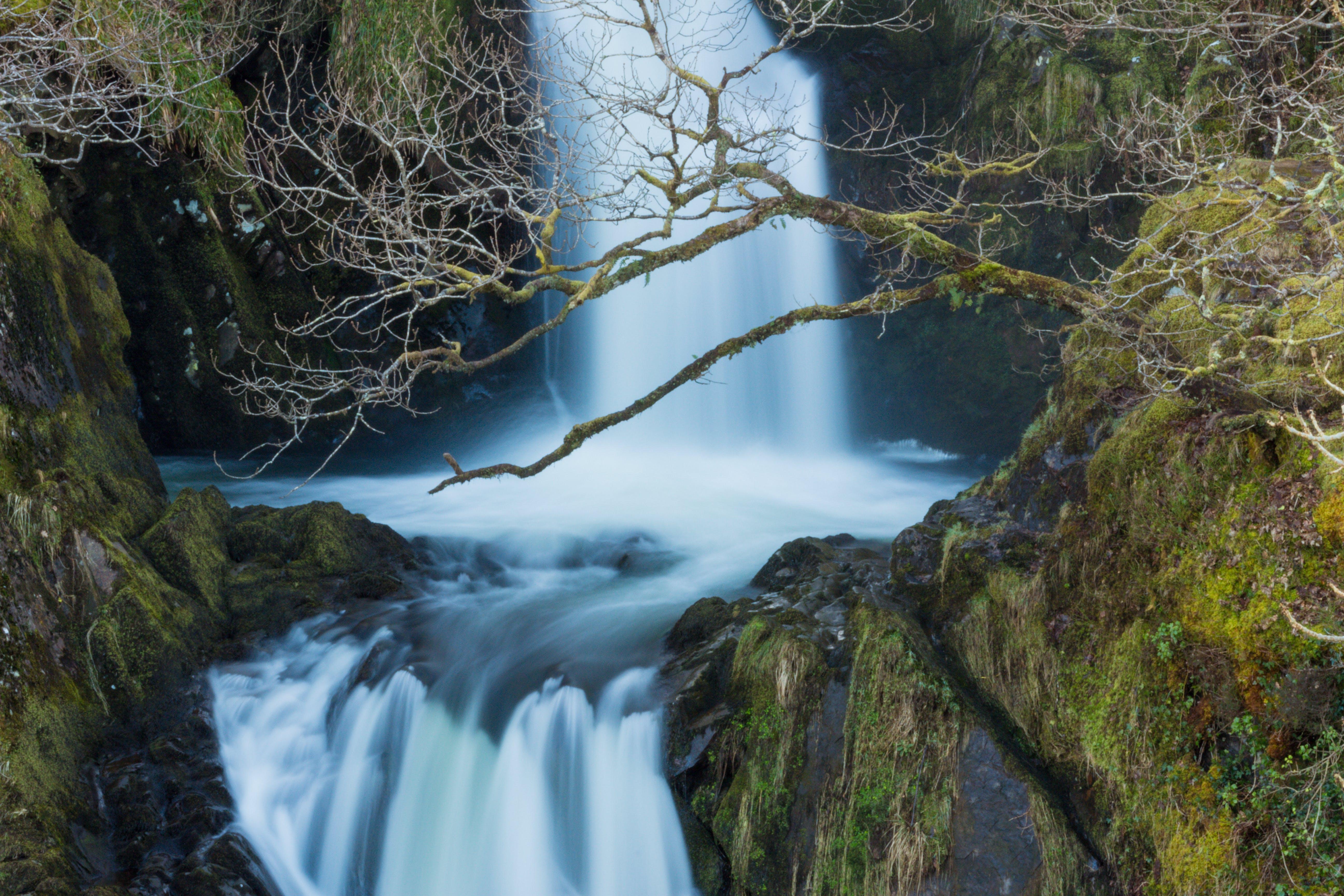 คลังภาพถ่ายฟรี ของ กระแสน้ำ, ตะไคร่น้ำ, ธรรมชาติ, น้ำ