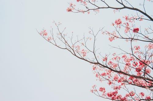 Fotos de stock gratuitas de árbol, brillante, caer
