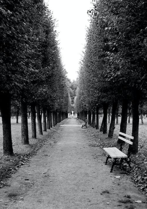 Ảnh lưu trữ miễn phí về Băng ghế, cây, công viên