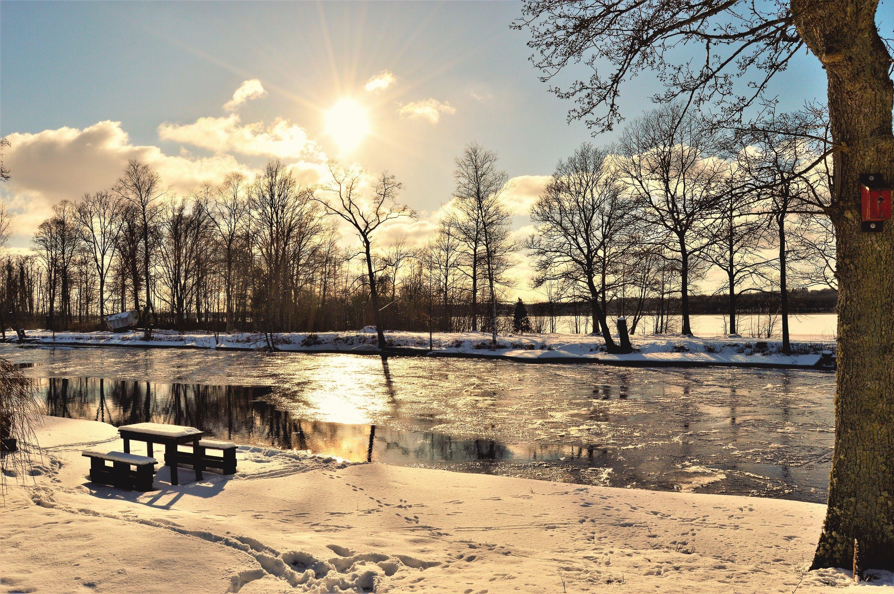 denní světlo, dřevo, krajina