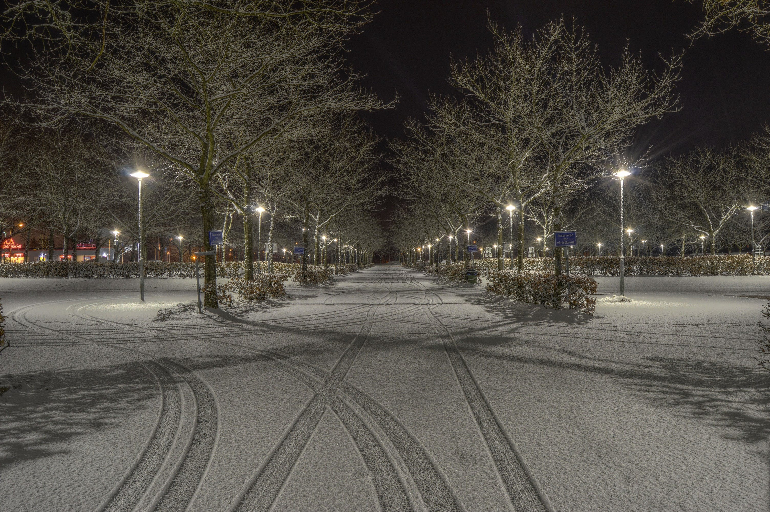 Cleared Road Near Trees and Light Post during Nighttime