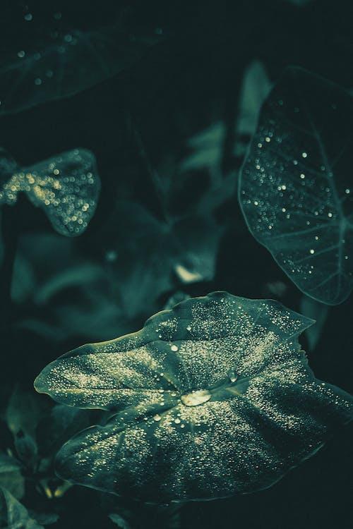 #outdoorchallenge, bitki, çiy, ıslak içeren Ücretsiz stok fotoğraf