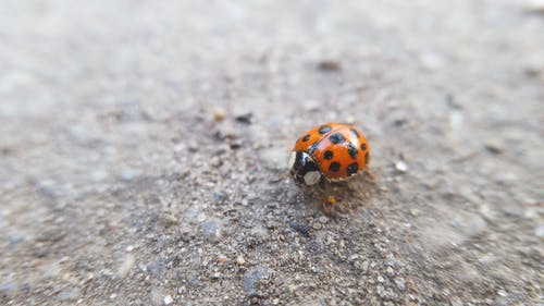 宏觀, 小蟲, 昆蟲, 瓢蟲 的 免費圖庫相片