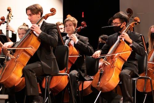 Free stock photo of cello, concert, focus
