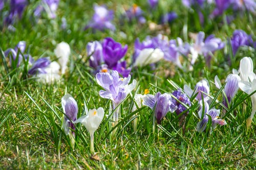 Free stock photo of Announcement of Spring, beautiful, colorful, early spring