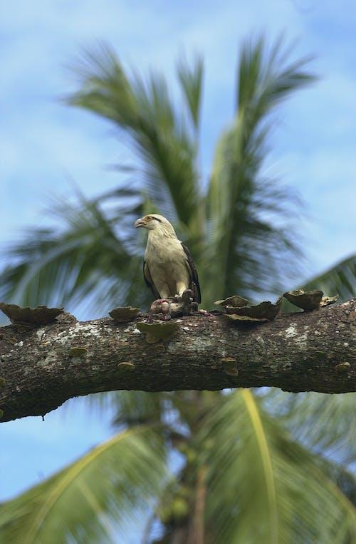 Foto profissional grátis de aves, rapaz