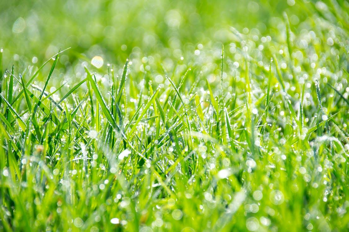 garten, gras, grün