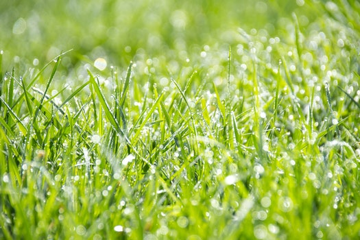 Green Grass during Daytime Close Up Shot Photography