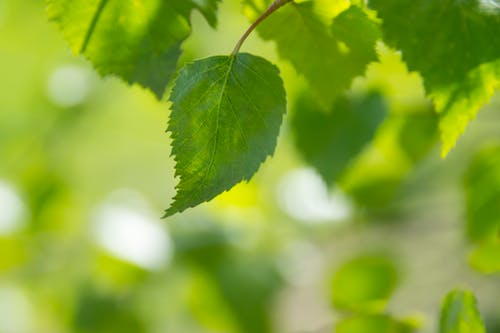 Free stock photo of background, background with green leaves, backgrounds, beam