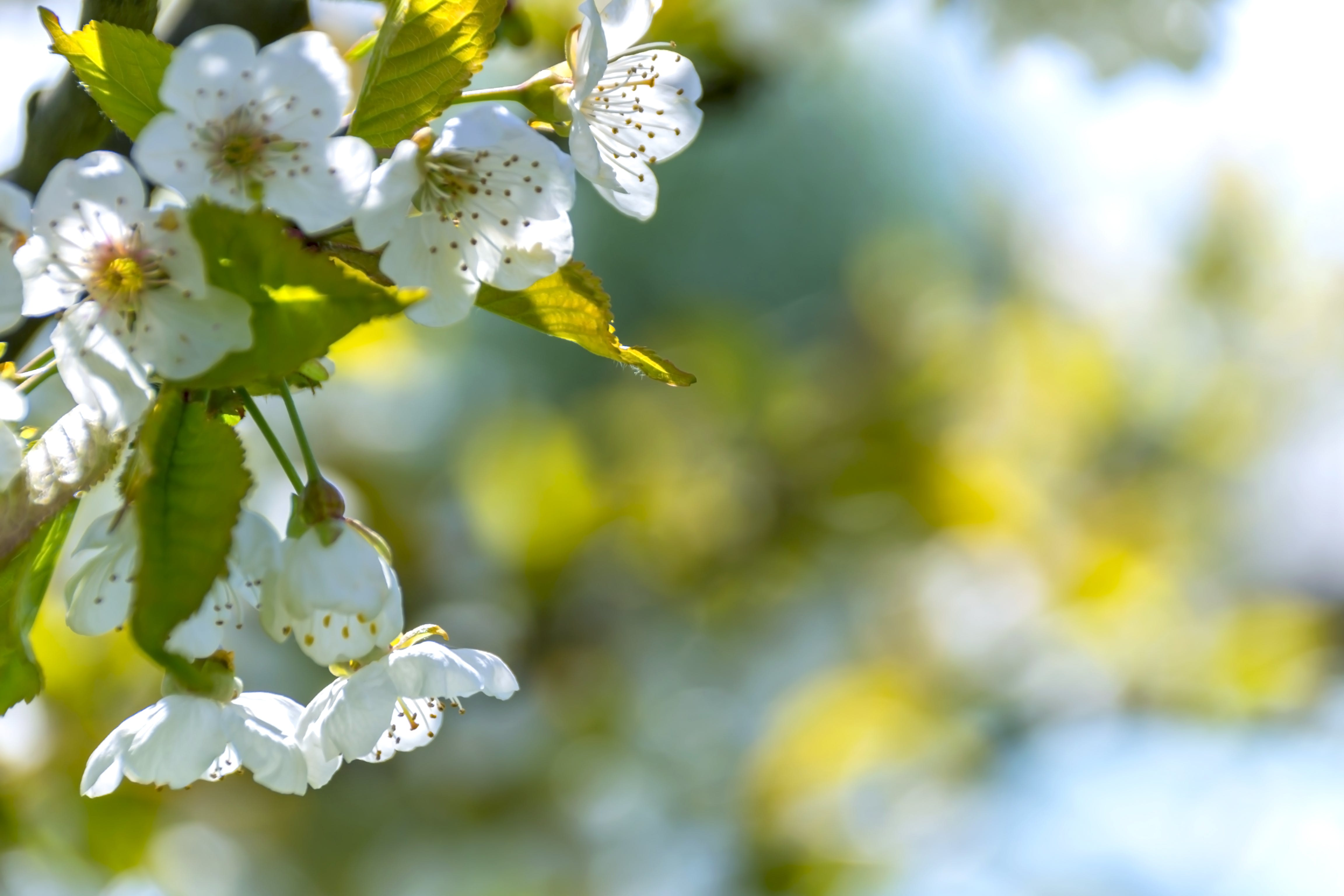 Selective Focus Photo of White Petaled Flowers