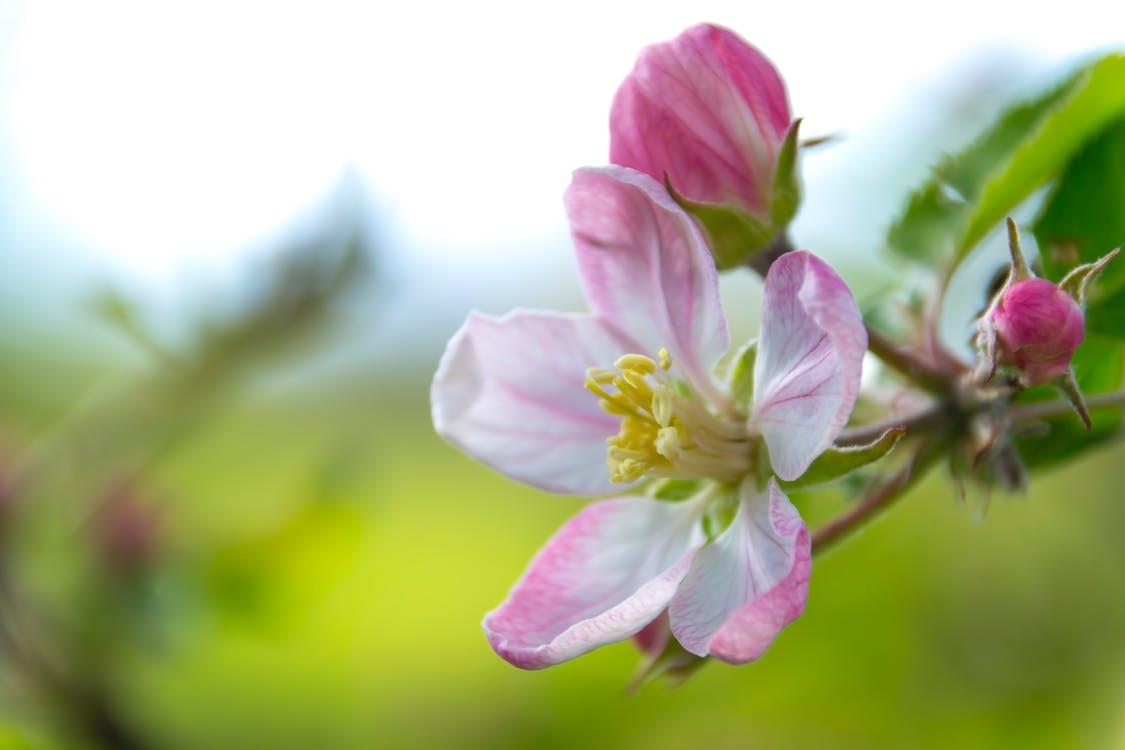 detailný záber, farby, flóra