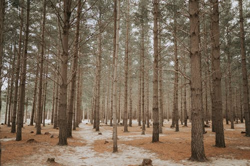 Základová fotografie zdarma na téma krása přírody, krásná příroda, les