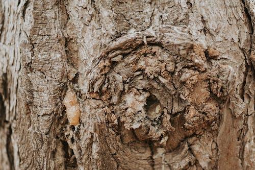 Základová fotografie zdarma na téma krása přírody, krásná příroda, kůra