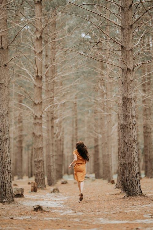 Základová fotografie zdarma na téma běhání, čtení, dobrodruh