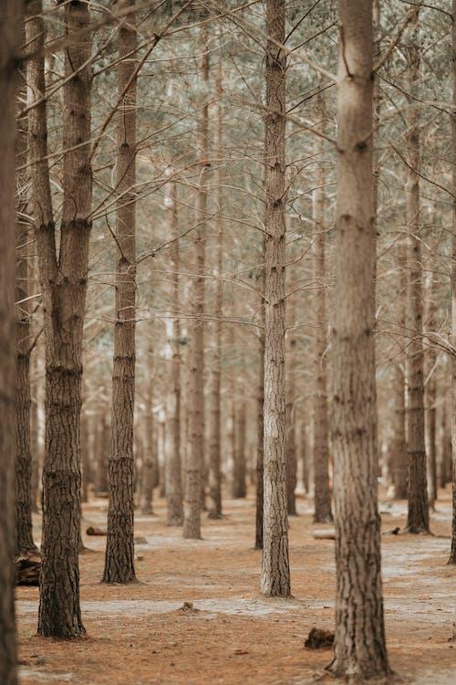 Základová fotografie zdarma na téma kmen stromu, kmeny stromů, krása přírody