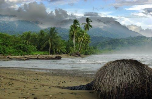 Immagine gratuita di playa