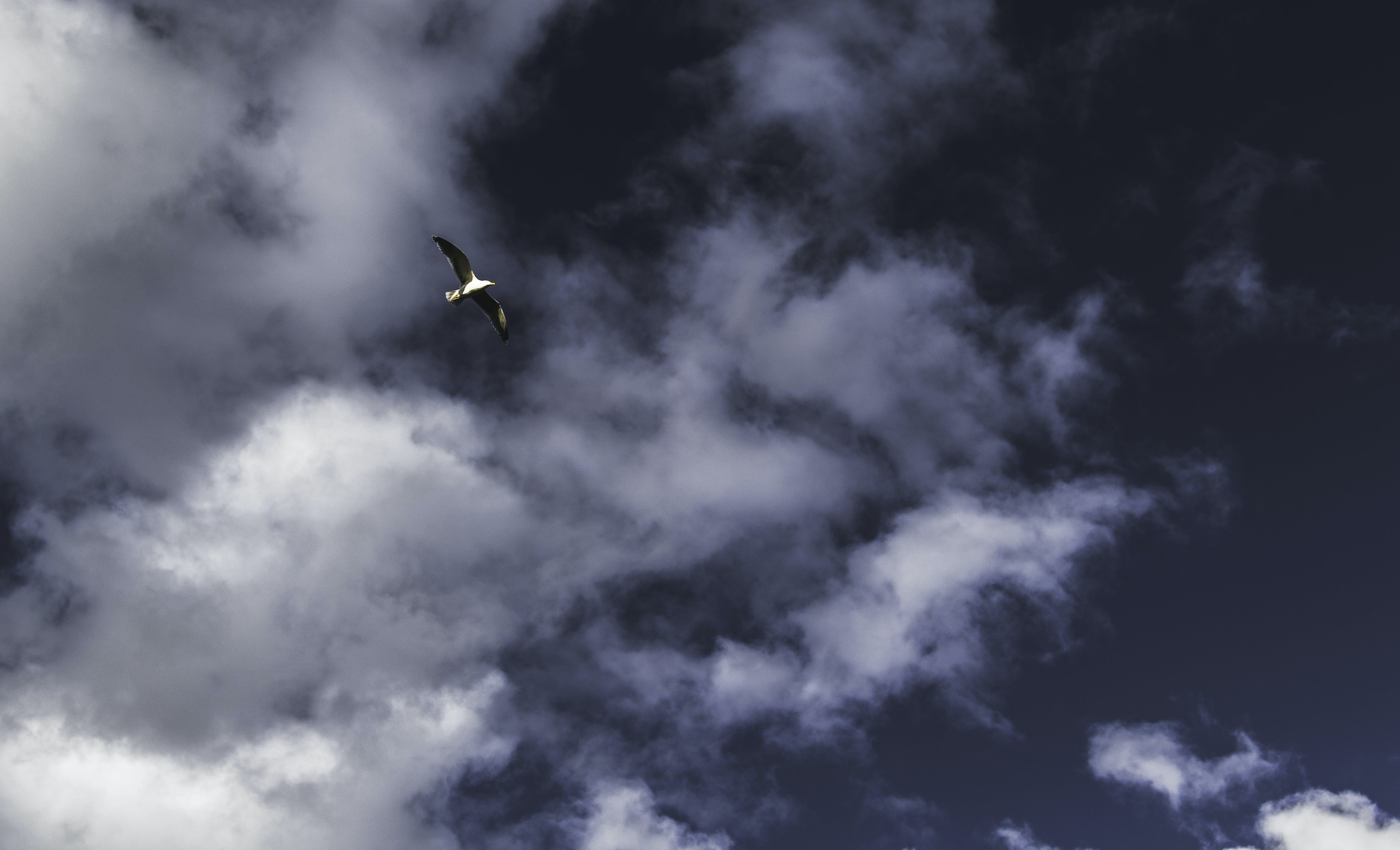 Foto stok gratis alam, angin, awan, berawan