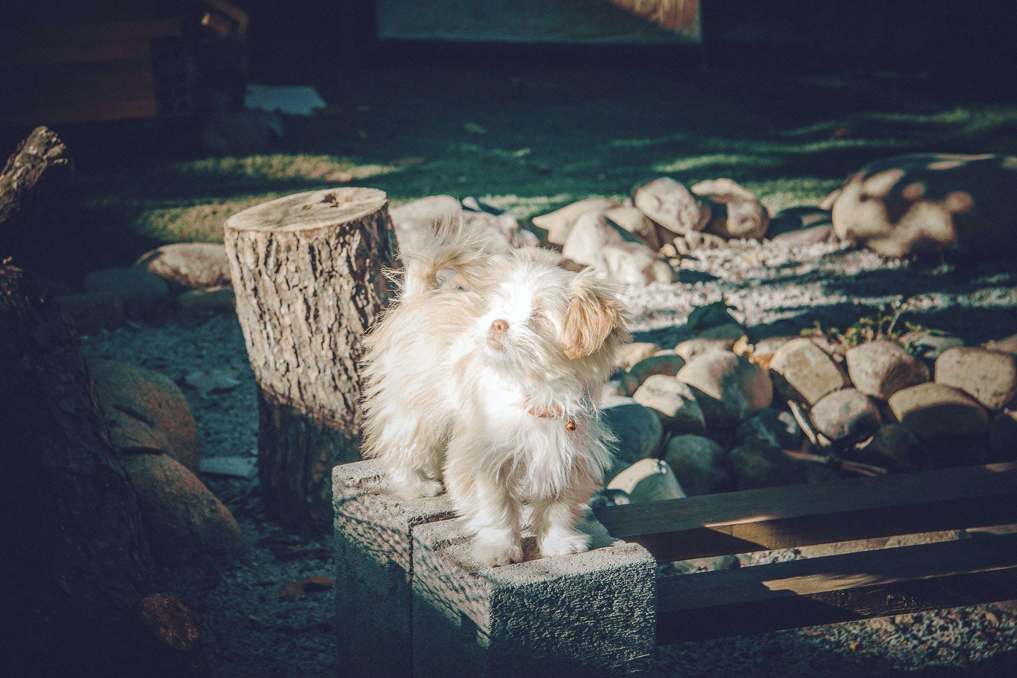 Free stock photo of animal animal photography  cat  cute  feline  kitt