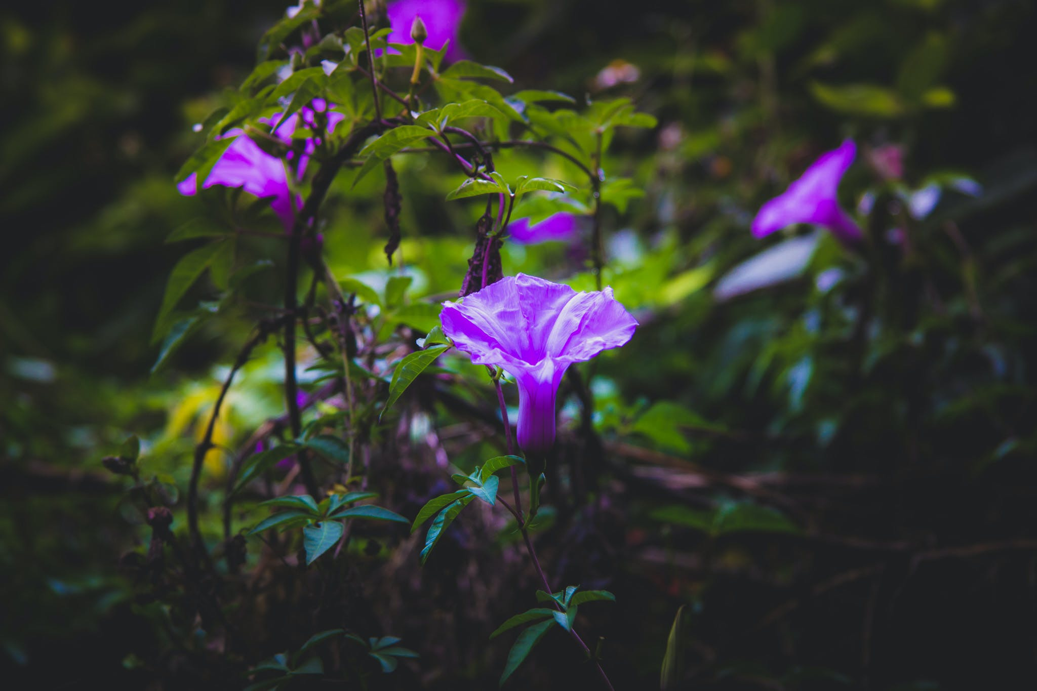 Free stock photo of dewdrops flora  flower  flowers  garden  greenery