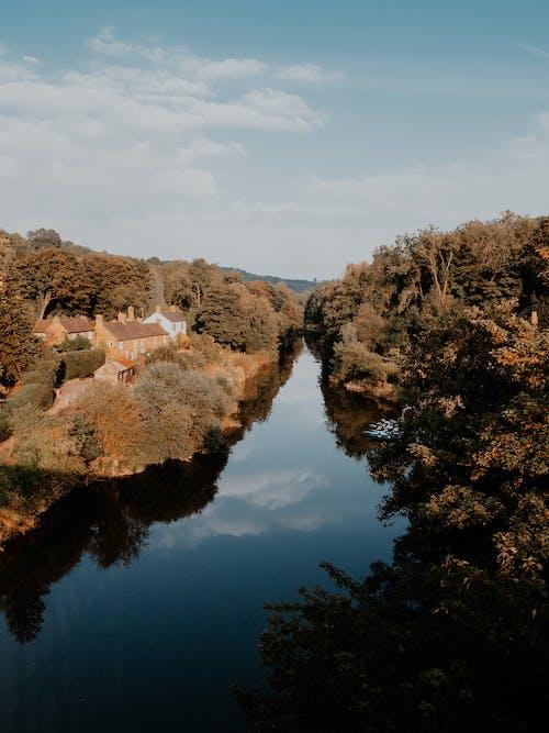 Gratis stockfoto met herfst, omvallen, val achtergrond