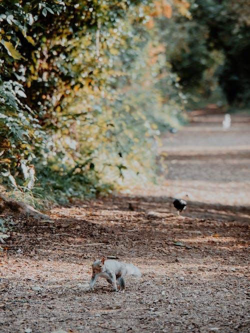 Gratis stockfoto met dieren in het wild, eekhoorn, herfst