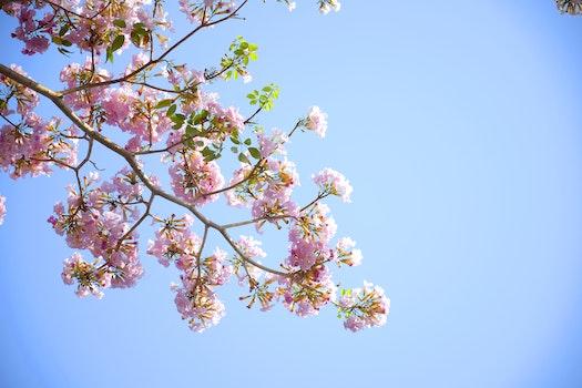 Pink Petaled Flowers Blooming during Daytime