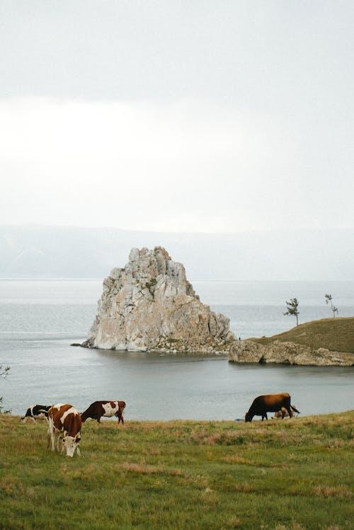 動物, 多雲的, 天 的 免費圖庫相片
