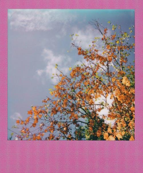 Gratis stockfoto met herfst, omvallen, polaroid