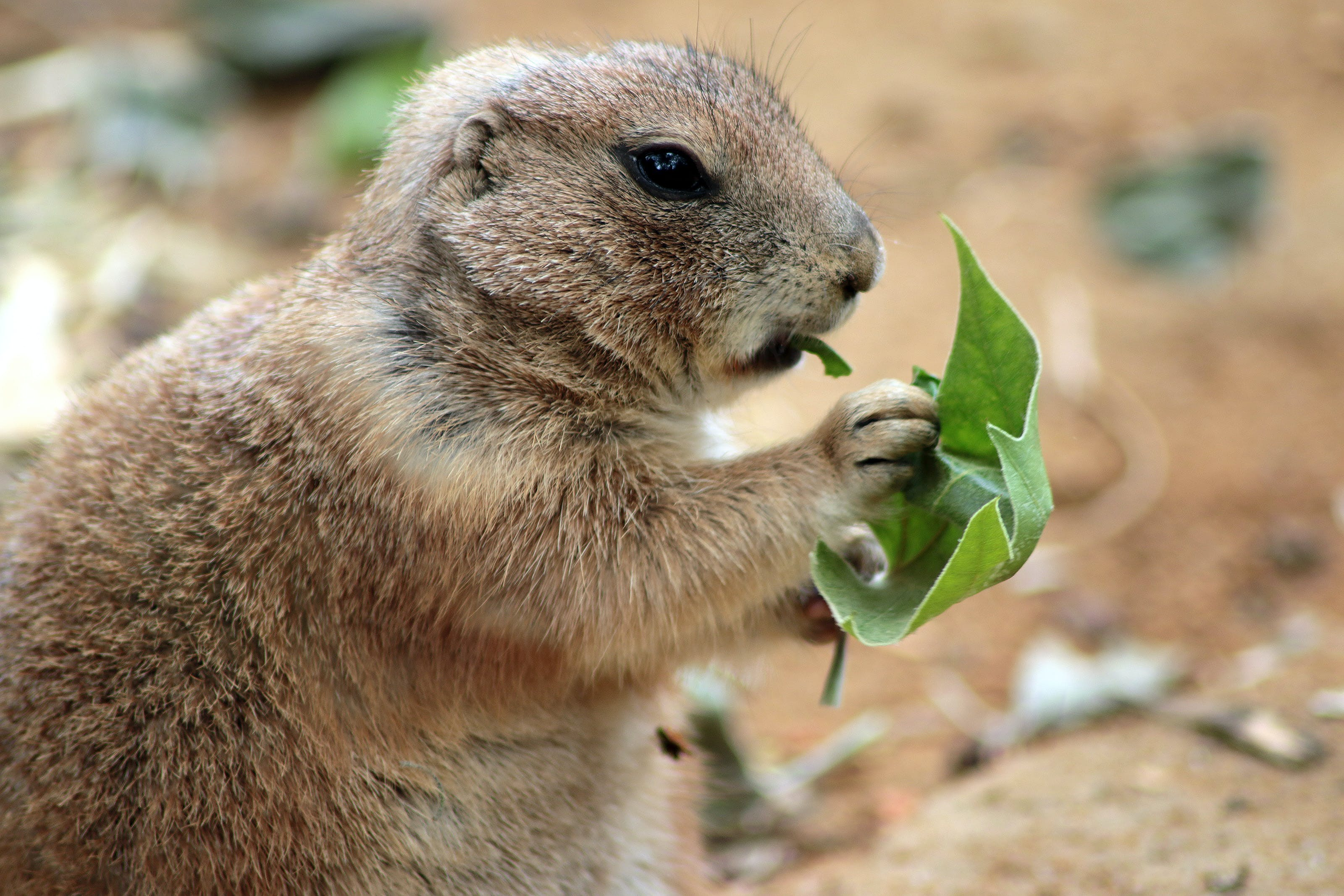 Close Up Photography of Squirrel Holding Green Leaf