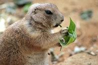 eating, animal, leaf